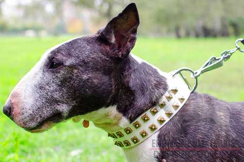 Stylish Studded White Leather English Bull Terrier Collar