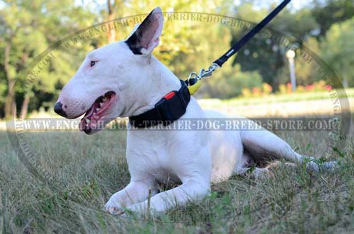 All Weather Nylon Bull Terrier Collar with Quick Release Buckle