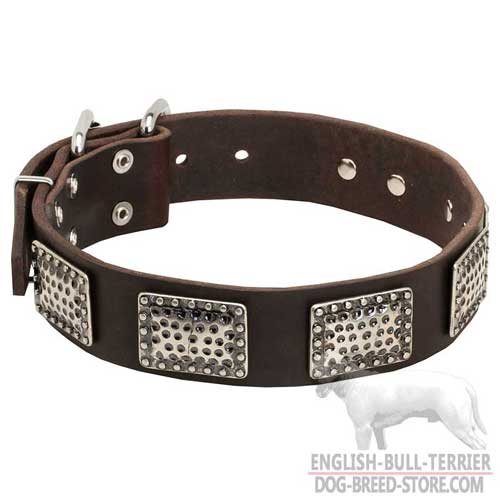 Bull Terrier Dog Collar adorned with plates