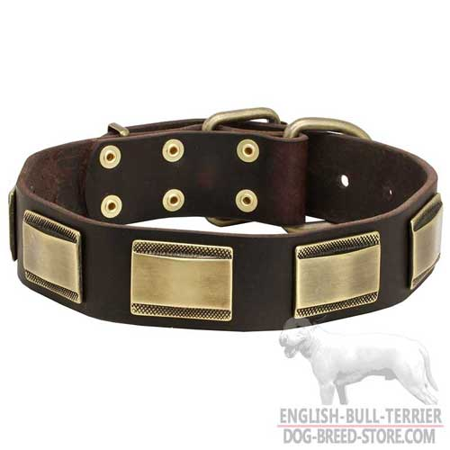 Bull Terrier Dog Leather Collar with Plates