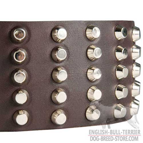 Bull Terrier Collar with Nickel Plated Studs
