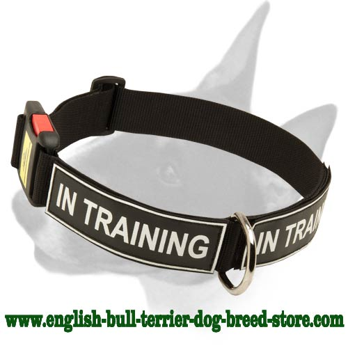 English Bull Terrier Nylon Collar With Identification Patches