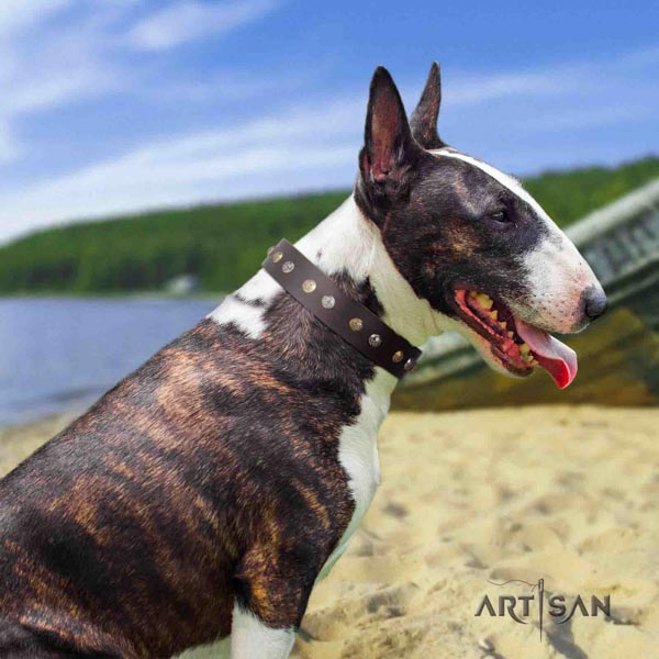 English Bull Terrier adorned genuine leather collar with corrosion resistant d-ring