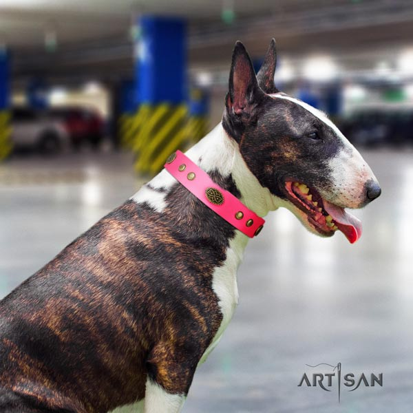 English Bull Terrier extraordinary genuine leather collar with rust-proof traditional buckle