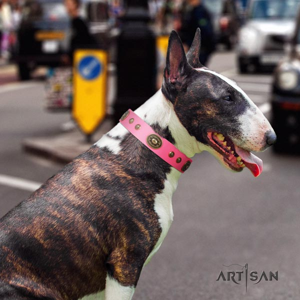 English Bull Terrier fashionable natural leather collar with rust resistant traditional buckle