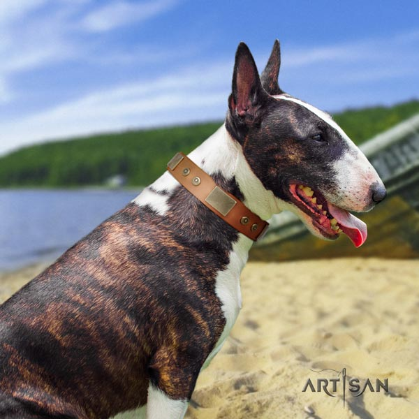 English Bull Terrier extraordinary natural leather collar with rust resistant fittings