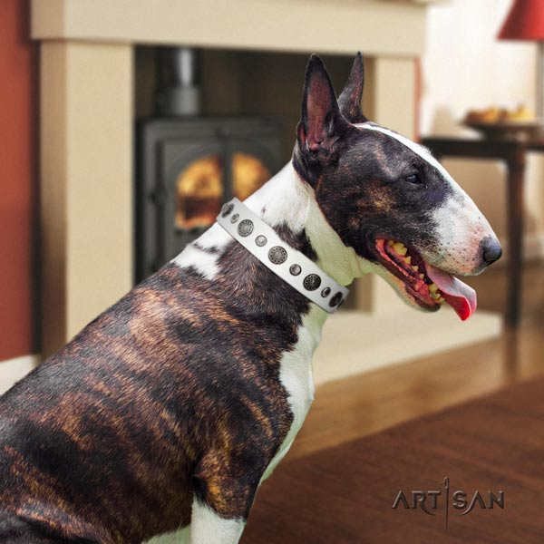 English Bull Terrier designer full grain genuine leather collar with rust-proof traditional buckle