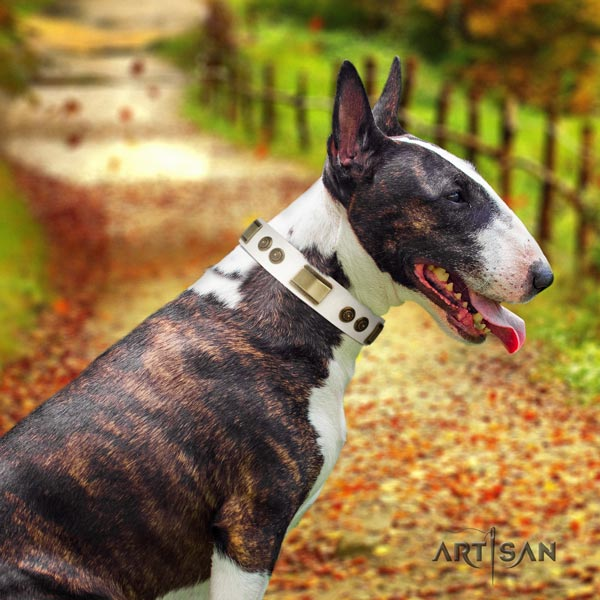English Bull Terrier designer natural leather collar with rust resistant buckle
