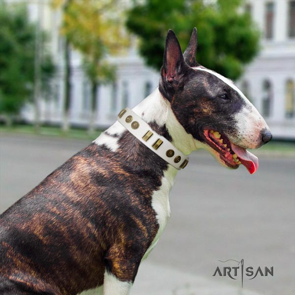 English Bull Terrier unique full grain genuine leather collar with corrosion resistant d-ring