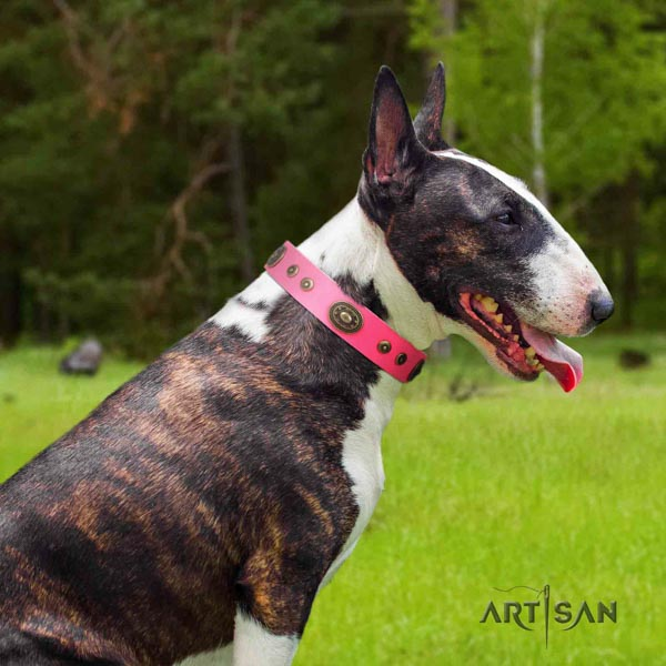English Bull Terrier stylish full grain genuine leather collar with rust-proof hardware
