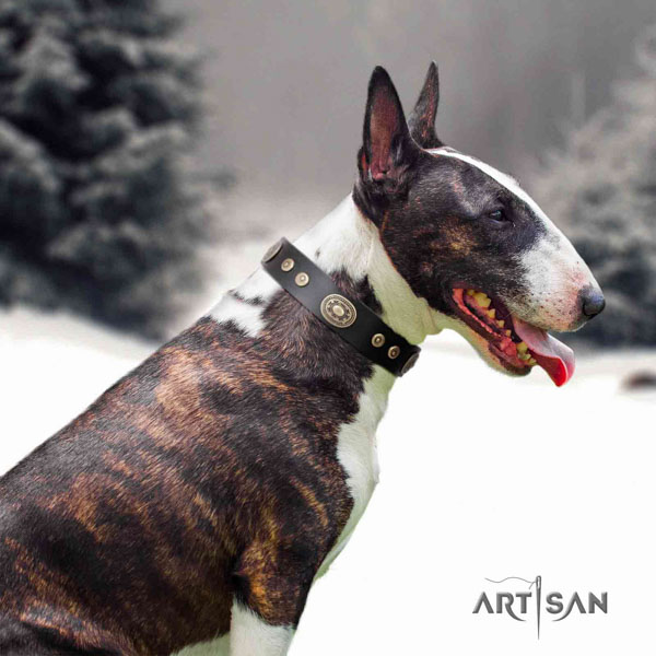 English Bull Terrier adorned full grain genuine leather collar with rust resistant fittings