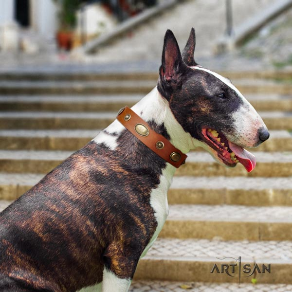 English Bull Terrier significant full grain leather collar with rust resistant d-ring