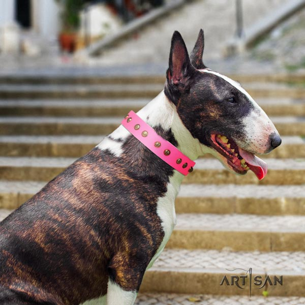English Bull Terrier studded genuine leather collar with corrosion proof fittings