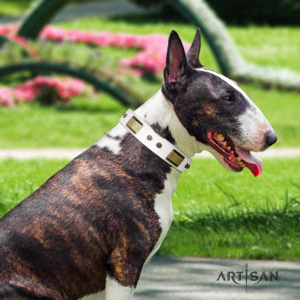English Bull Terrier convenient full grain natural leather collar with rust resistant traditional buckle