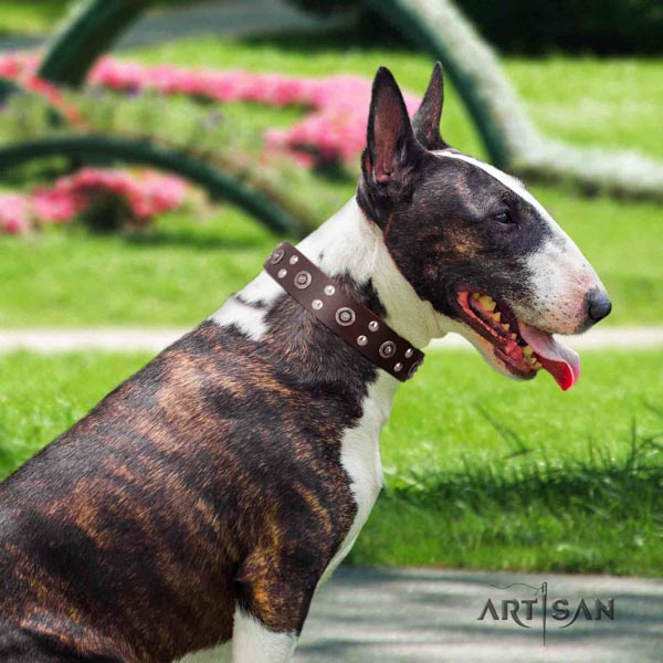 English Bull Terrier fine quality full grain natural leather collar with rust-proof hardware