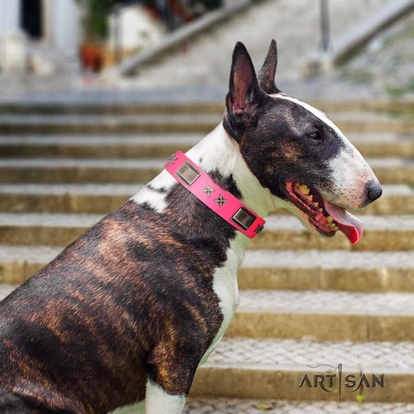 English Bull Terrier embellished genuine leather collar with corrosion proof fittings