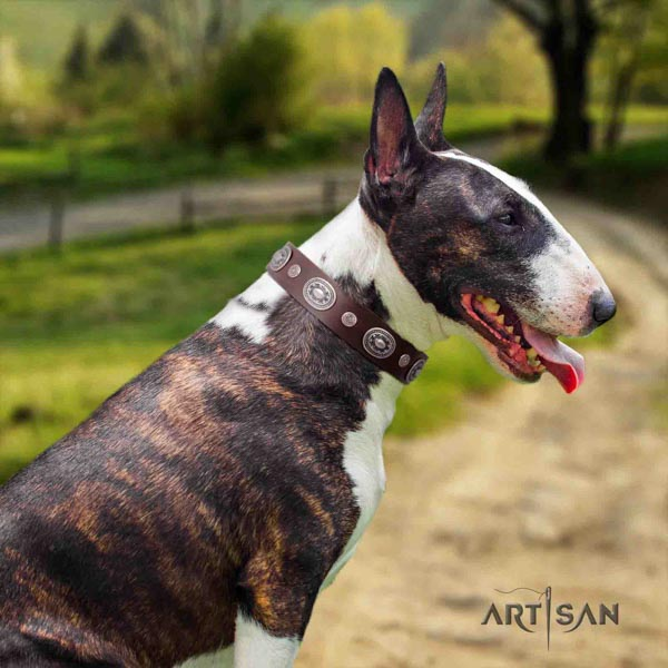English Bull Terrier handcrafted full grain genuine leather collar with corrosion resistant traditional buckle