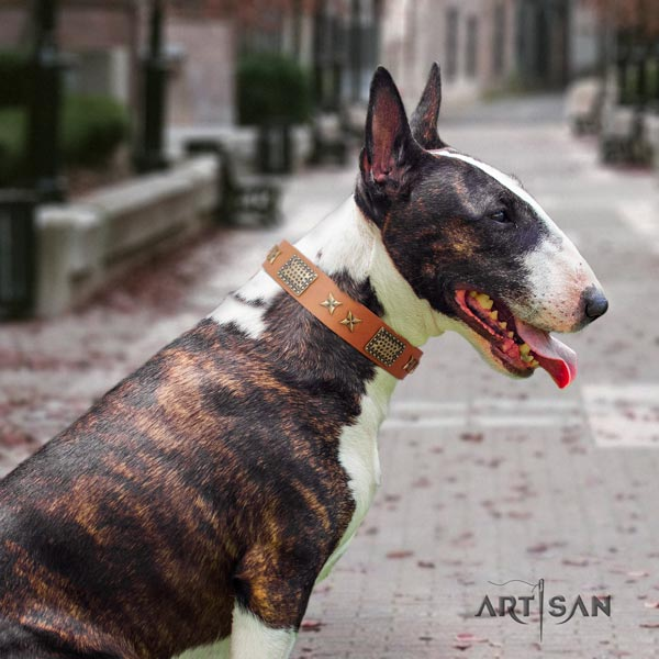 English Bull Terrier best quality leather collar with corrosion resistant d-ring