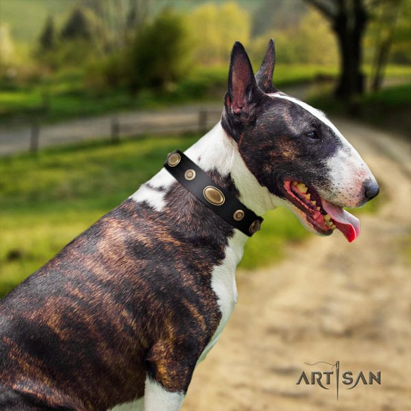English Bull Terrier adjustable natural leather collar with rust-proof fittings