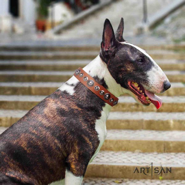 English Bull Terrier impressive genuine leather collar with rust-proof buckle
