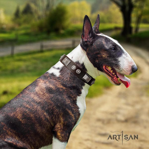 English Bull Terrier adorned full grain genuine leather collar with rust-proof d-ring