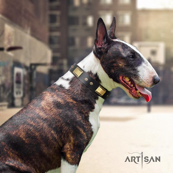 English Bull Terrier extraordinary leather collar with rust resistant buckle