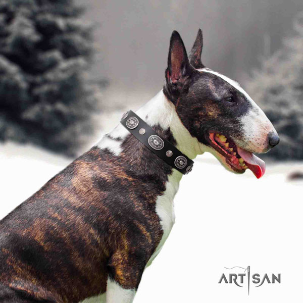 English Bull Terrier designer full grain genuine leather collar with rust resistant buckle