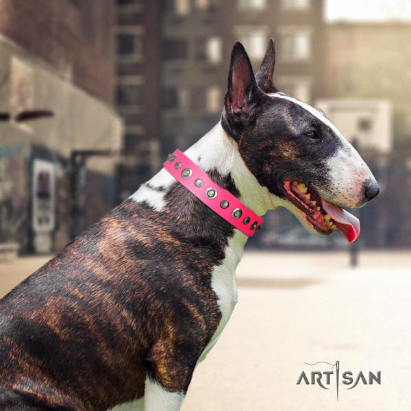 English Bull Terrier decorated full grain natural leather collar with corrosion proof d-ring