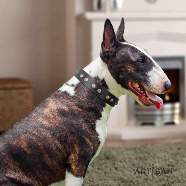 English Bull Terrier extraordinary full grain natural leather collar with corrosion proof traditional buckle