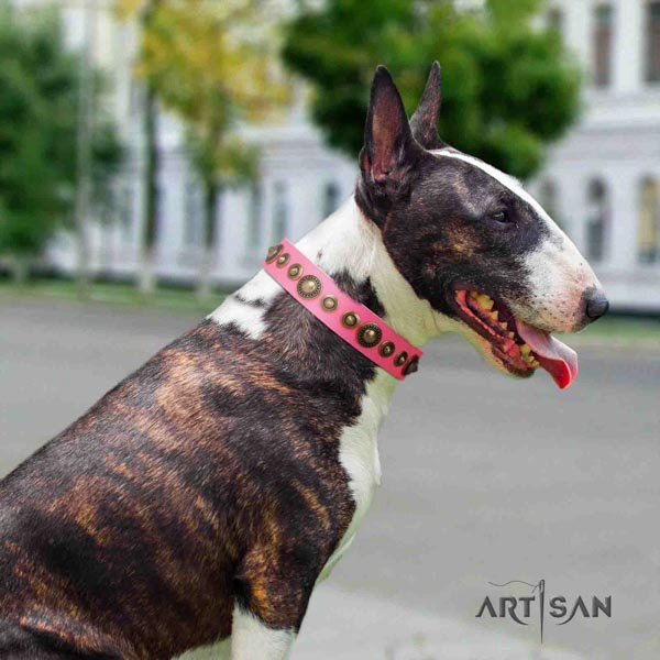 English Bull Terrier amazing natural leather collar with rust resistant buckle