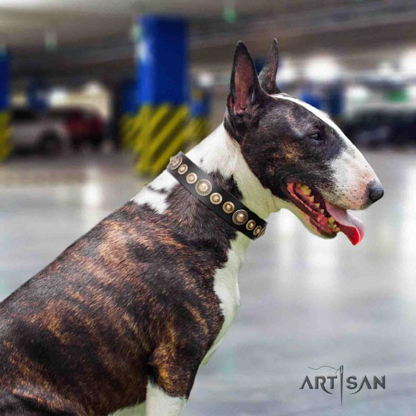 English Bull Terrier easy to adjust leather collar with corrosion proof d-ring