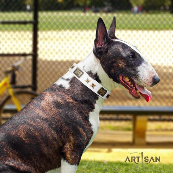 English Bull Terrier embellished full grain natural leather collar with rust resistant fittings