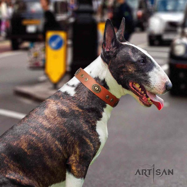 English Bull Terrier handmade full grain natural leather collar with corrosion proof traditional buckle