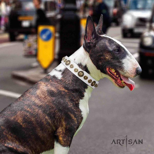 English Bull Terrier handmade genuine leather collar with corrosion resistant fittings
