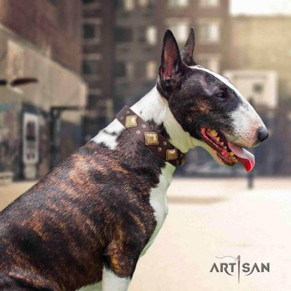 English Bull Terrier handcrafted natural leather collar with rust resistant hardware