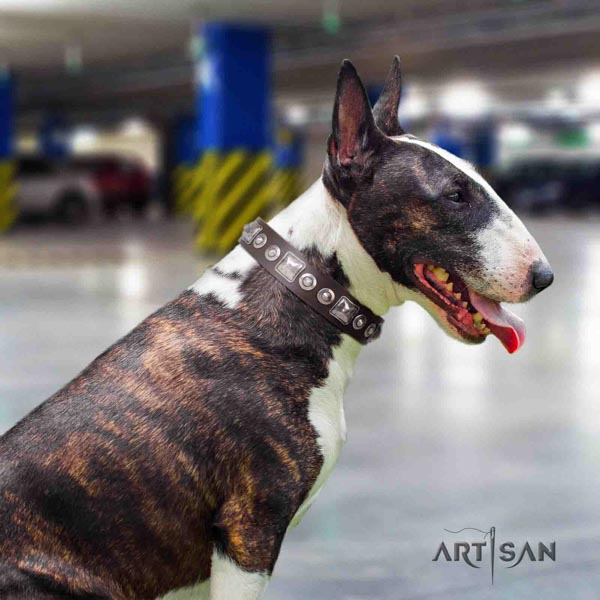 English Bull Terrier best quality leather collar with corrosion resistant hardware