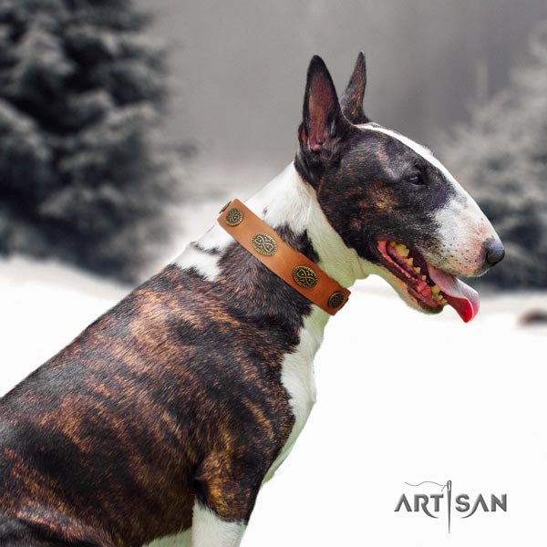 English Bull Terrier designer full grain natural leather collar with corrosion resistant hardware