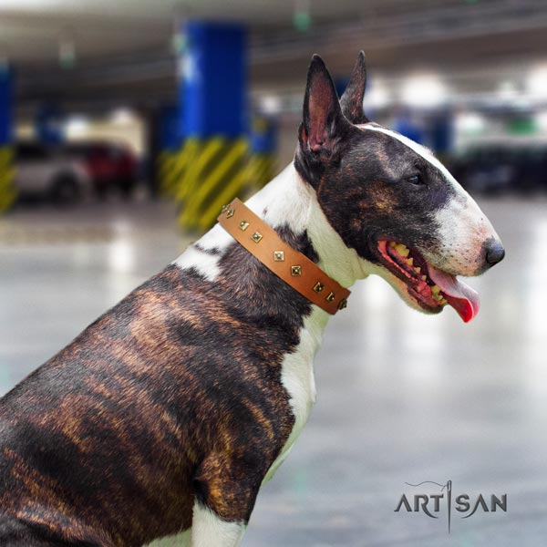 English Bull Terrier significant natural leather collar with rust resistant hardware