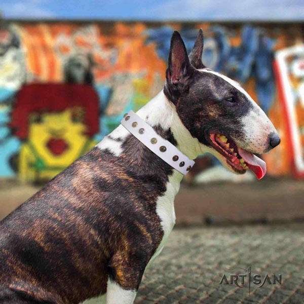 English Bull Terrier top quality natural leather collar with corrosion resistant d-ring
