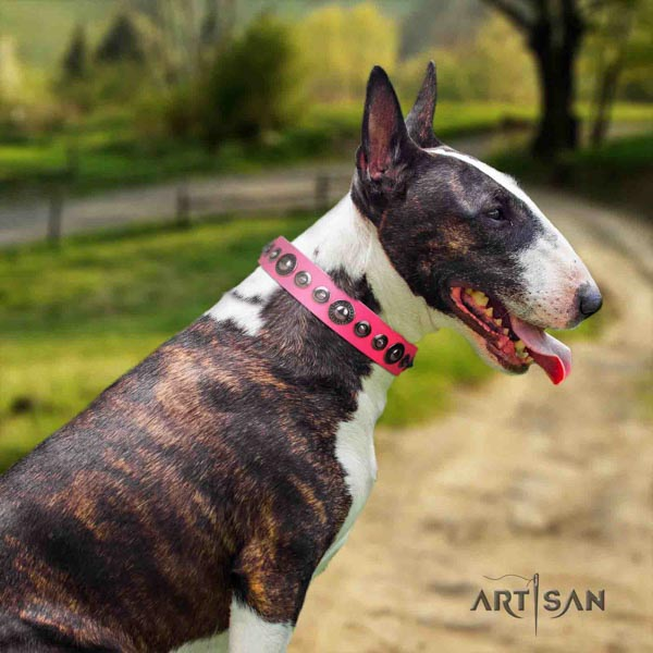 English Bull Terrier studded full grain leather collar with rust-proof d-ring