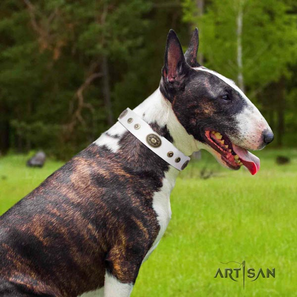 English Bull Terrier impressive leather collar with corrosion proof buckle