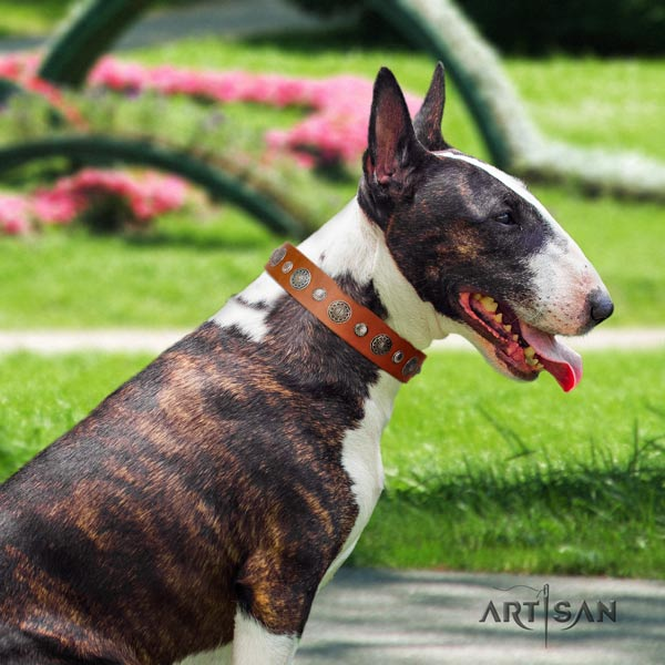English Bull Terrier comfortable full grain natural leather collar with corrosion resistant traditional buckle