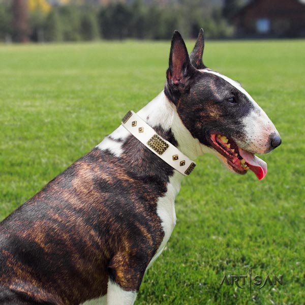 English Bull Terrier impressive natural leather collar with rust-proof fittings