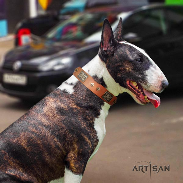 English Bull Terrier adorned full grain leather collar with corrosion proof traditional buckle