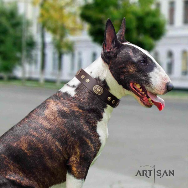 English Bull Terrier handcrafted full grain natural leather collar with rust-proof traditional buckle