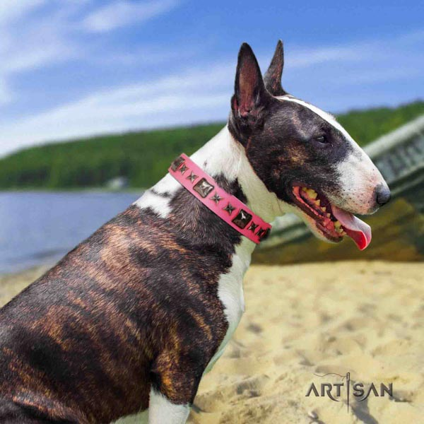 English Bull Terrier exquisite full grain leather collar with corrosion resistant d-ring