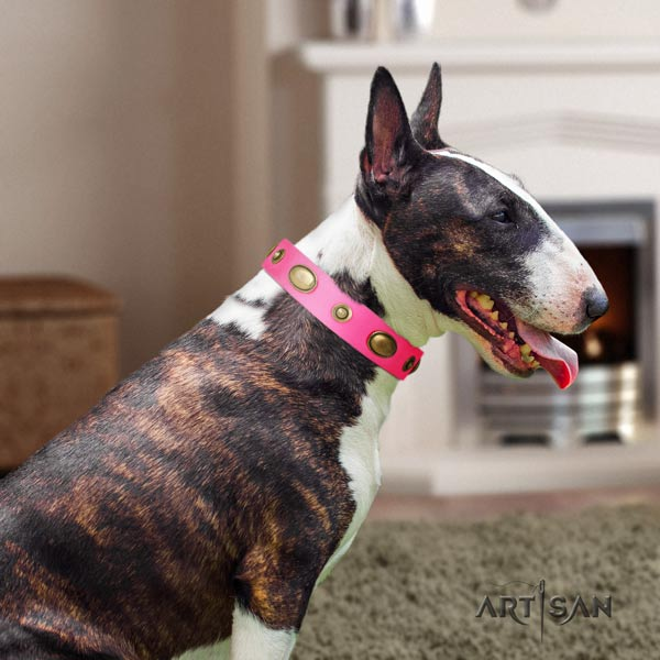 English Bull Terrier handmade leather collar with corrosion resistant buckle