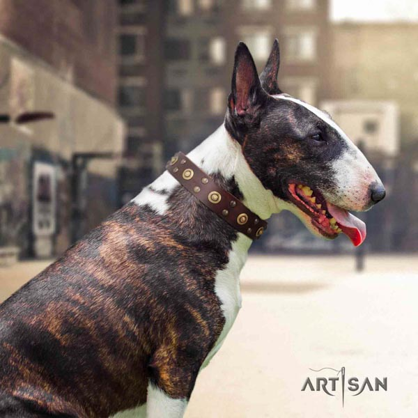 English Bull Terrier stylish design leather collar with corrosion resistant d-ring