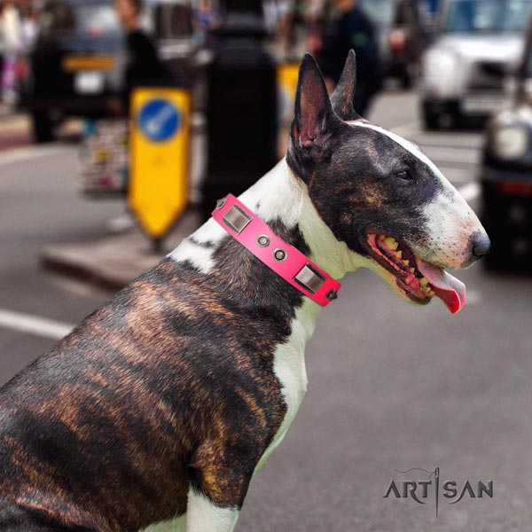 English Bull Terrier trendy full grain leather collar with rust resistant traditional buckle
