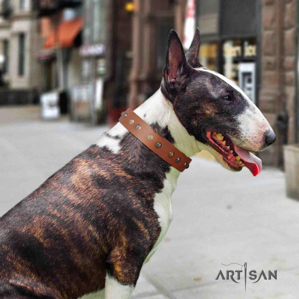 English Bull Terrier convenient full grain genuine leather collar with corrosion resistant d-ring